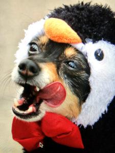 Penguin dog